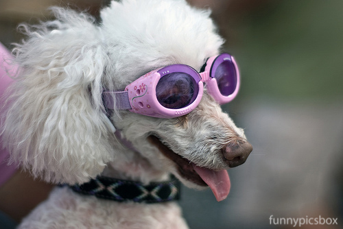Funny Dogs With Glass Photos Funny Pics Box