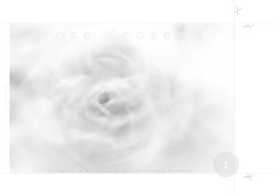 Download gratuito di un libro fotografico dedicato alle rose