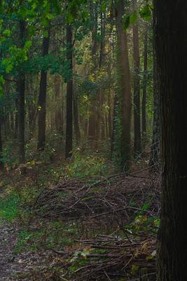 Las po deszczu zdjęcie