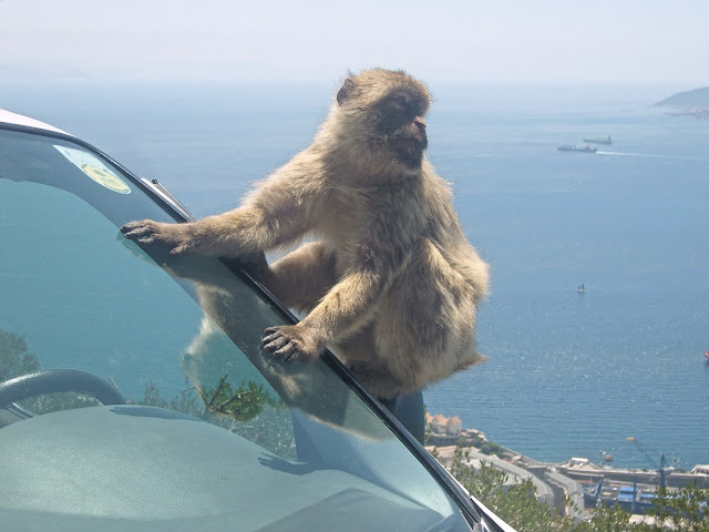 day trip to gibraltar