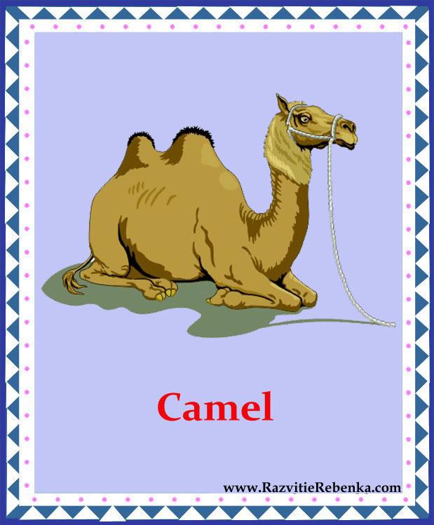 картинки с изображением животных: