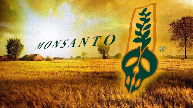 Η Ουγγαρία καταστρέφει όλα τα χωράφια καλαμποκιού της Monsanto