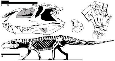 Prestosuchus skull