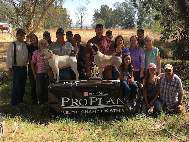 2017 Brock and Wells Shooting Dog Classic - Nor Cal BDC - Oroville Wildlife Area