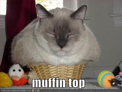 Funny Fat Cats Videos Carl's:funny Fat Cat Picture