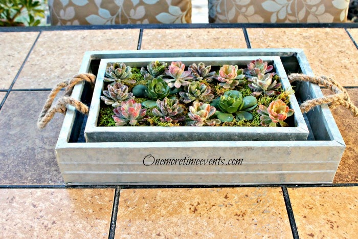 Decorating with succulents for patio table at One More Time Events.com