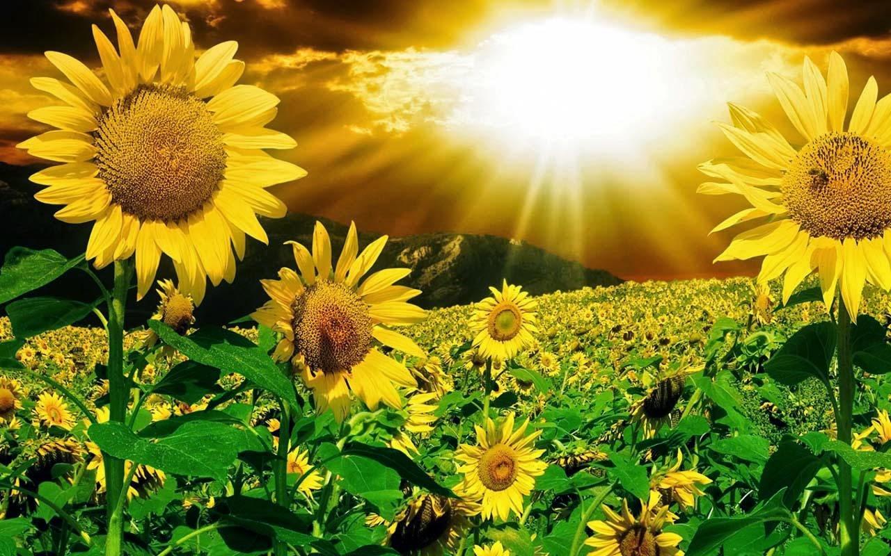 download gambar bunga