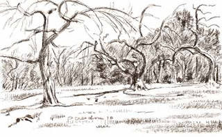 Orchard drawing by Paul Creedon