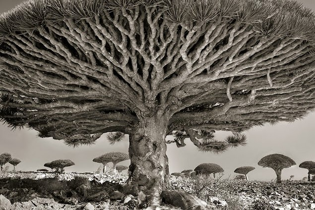 beth moon oldest living trees