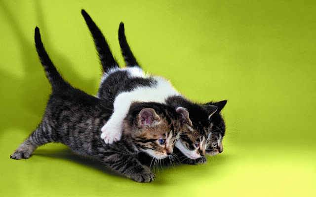 kittens pictures, funny kittens