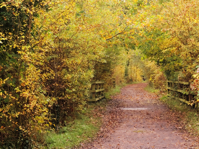 Path turned into a tunnel of autumn foliage