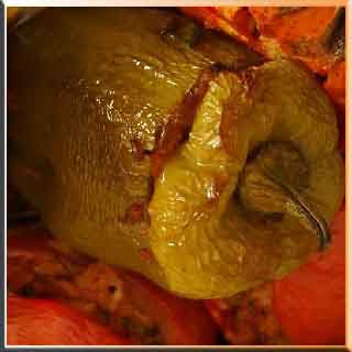 dolma tarifi    biber dolma    dolma kalem    zeytinyağlı dolma    midye    kuru dolma    midye dolma    biber dolma tarifi  oktay usta  dolma nasıl yapılır    dolma tarifleri