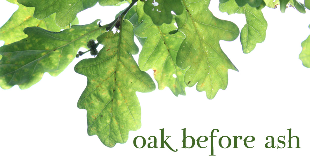 oak before ash