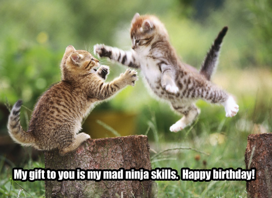 Funny Animal Birthday