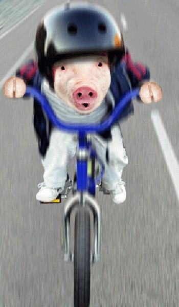Puerco en bicicleta