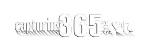 capturing 365 摄♥忆