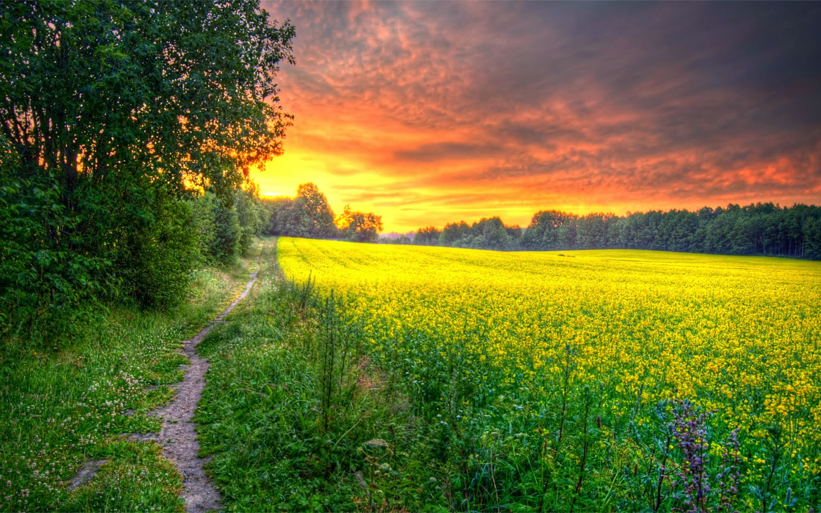 Beautiful Field Wallpapers Most Beautiful Places In The