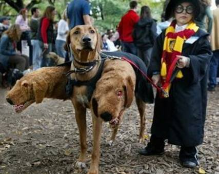 Harry Potter and Dog Costume