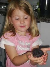 Mi hamster y yo