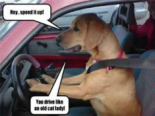 Cute dog in a car