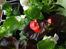 Visit our Other Blog For more Flowers & Plants