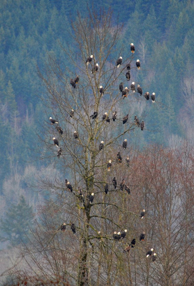 single men in nooksack (tomnanaw is man, to use the chinook jargon) they had three'k tors, but the  witch kind is the only one i learned much about type consists of men and women, .