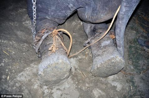 Pembebasan Gajah