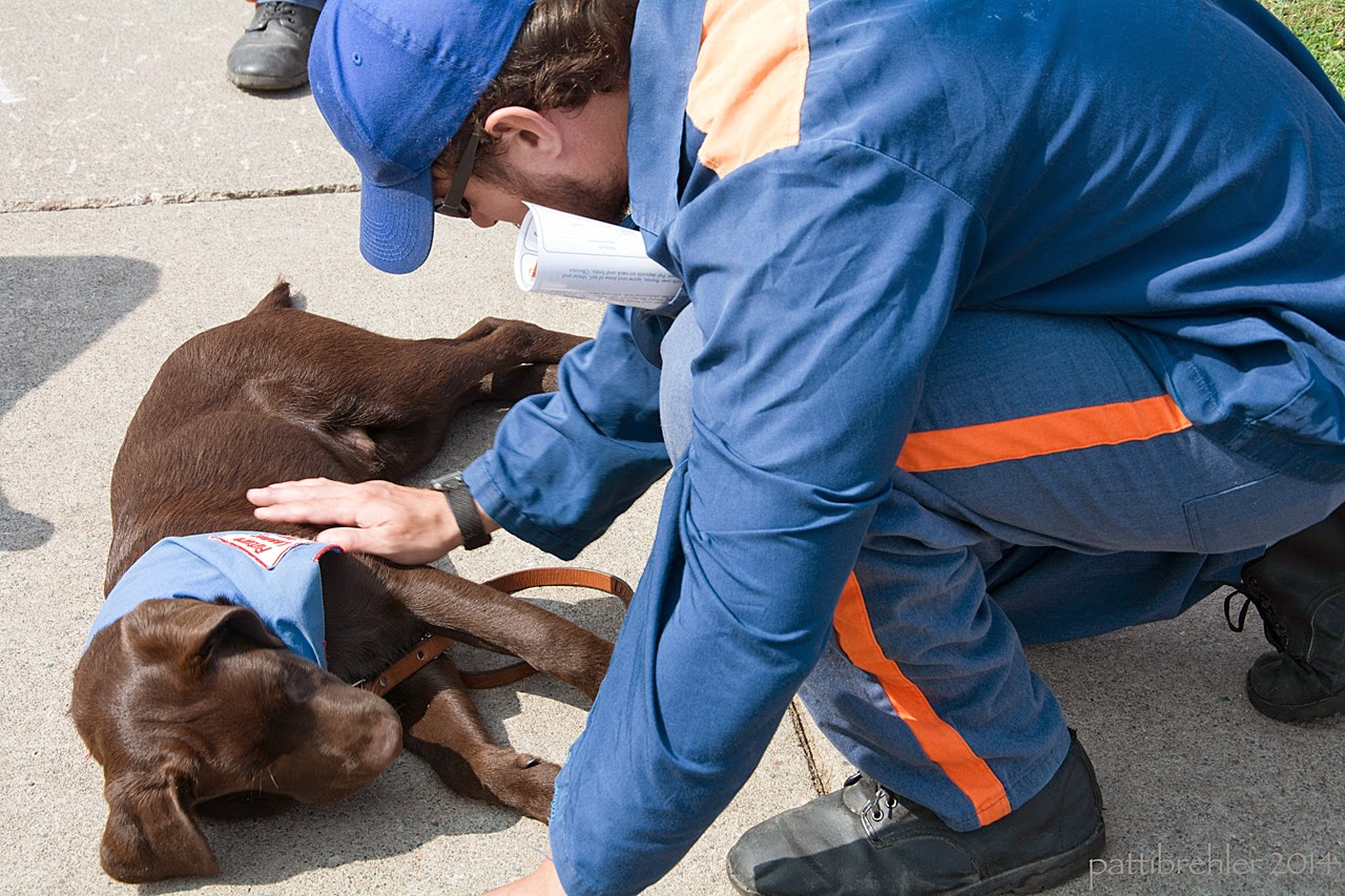 A man dressed in the prison blue uniform and blue ball cap is squatting over a young chocolate lab. The lab is lying on his right side on cement with his head nearest to the camera, he is wearing the blue Future Leader Dog bandana and his leash is resting on the cement. The man is looking at the dog, and is petting his side with his right hand.