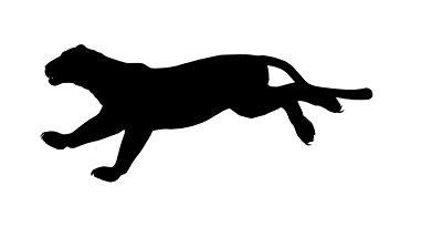 centre for fortean zoology australia doon doon panther stalks the rh cfzaustralia com Black Panther Logo Black Panther T-Shirt
