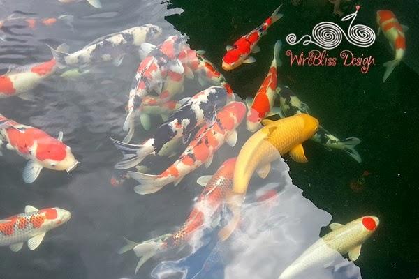 Chinese New Year 2014 at WireBliss, Koi fish