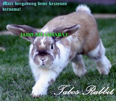 promosi peternakan kelinci