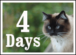 Only FOUR days until we walk the walk for homeless cats and kittens!