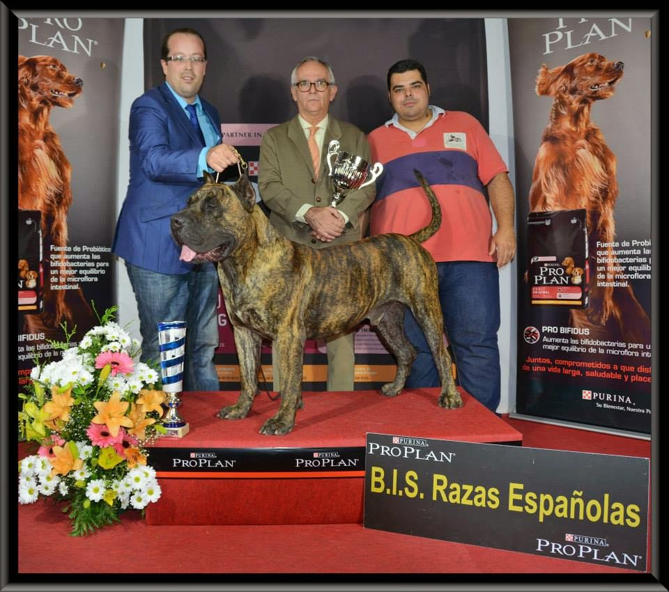 Best Spanish Breed - International Dog Show in Valladolid 22 February 2015 - results