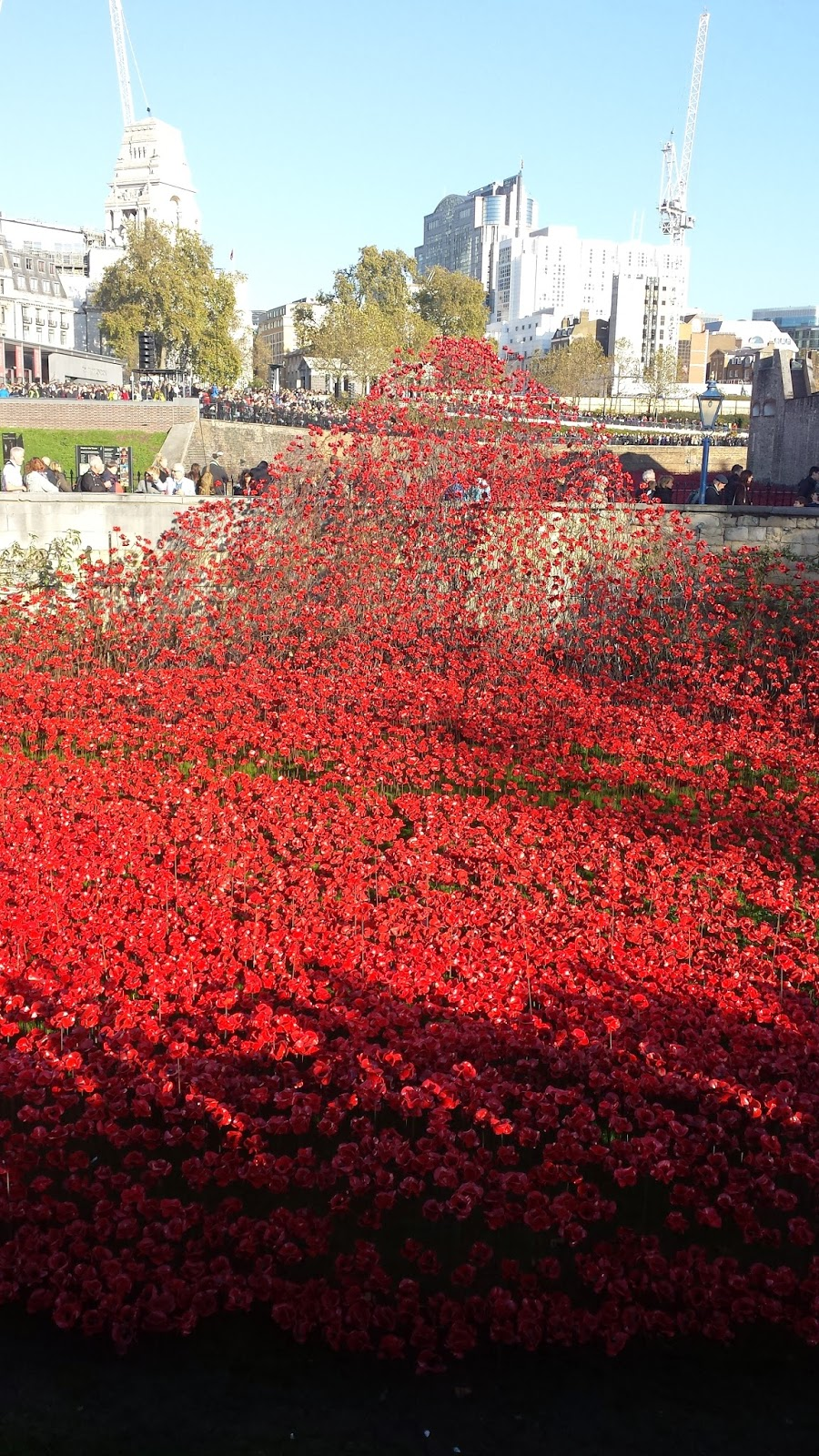 Poppies in London