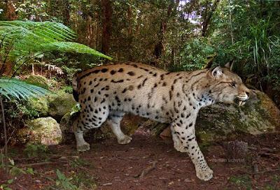felidae extinta Metailurus