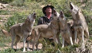 Lobos aullando con un hombre