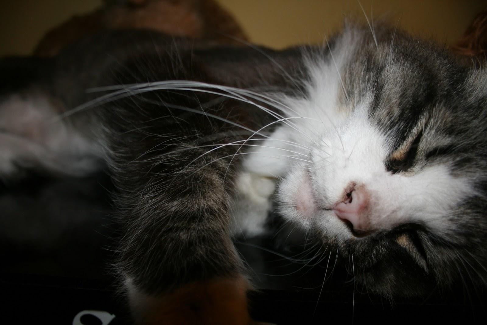 lonely sad cat - photo #44
