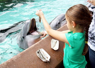Tessa enjoyed feeding the dolphins fish at Dolphin Cove. We were so proud...she did  fantastic job!