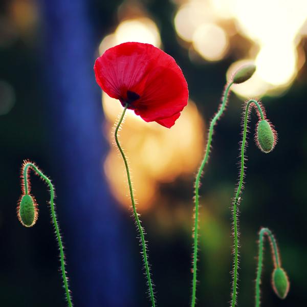 Photography by Pawel Matys