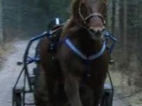 Hevonen joka ei saanut henkeä