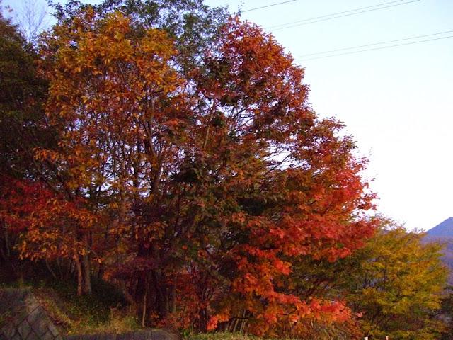 Fall leaves in Nikko, Japan