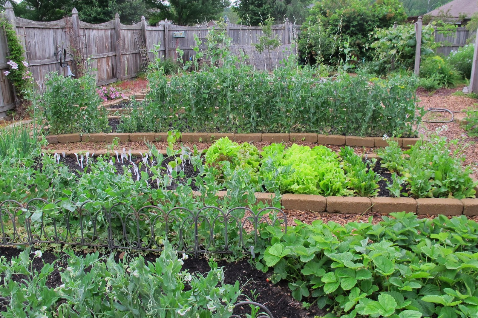 Vegetable Garden Ideas Minnesota dear friend and gardener - time is marching out of the garden