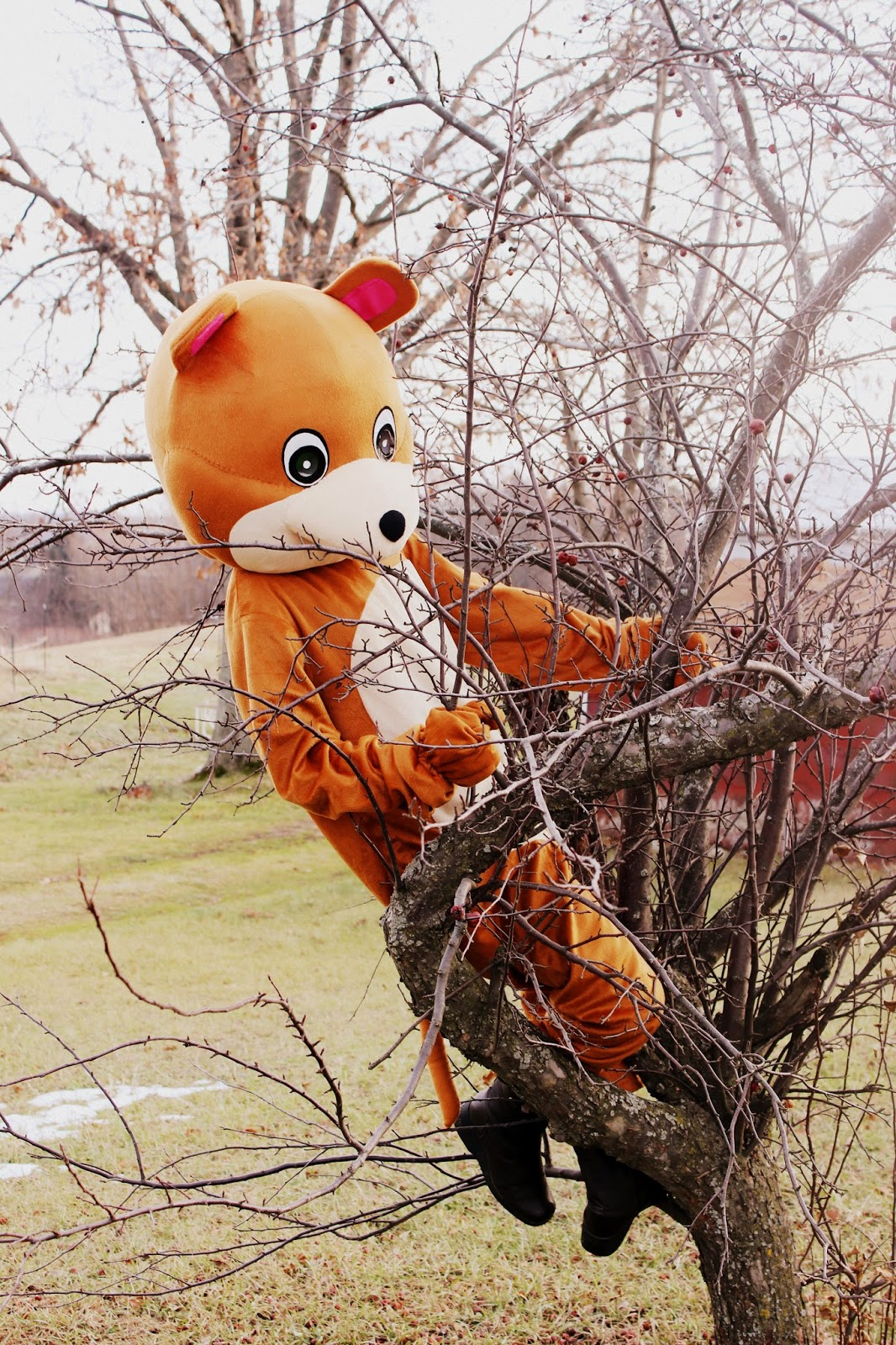 the random writings of rachel bears can climb trees