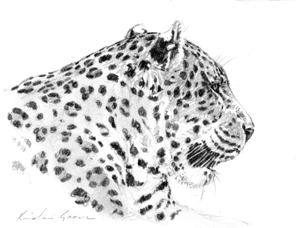 Leopard face drawing