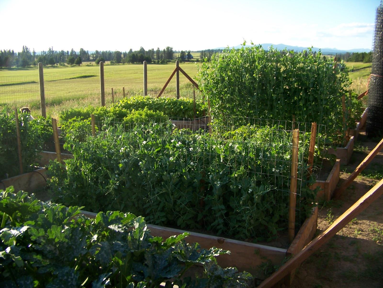Amanda Bonilla garden