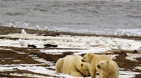 Suhu Antartika Mencapai Terpanas di Tahun 2013
