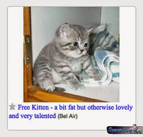 funny cute kitten picture