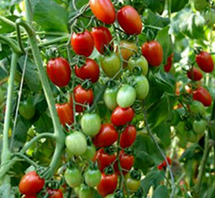 types of tomatoes, Natural flower