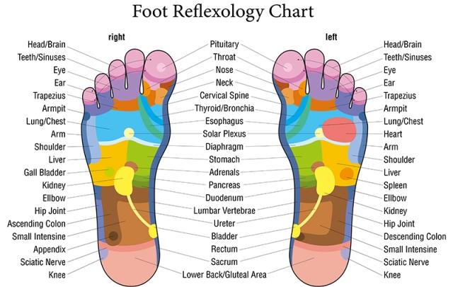foot reflexalogy techniques chart