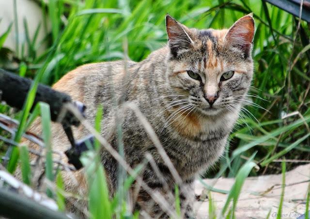 fun-colored tortie feral cat